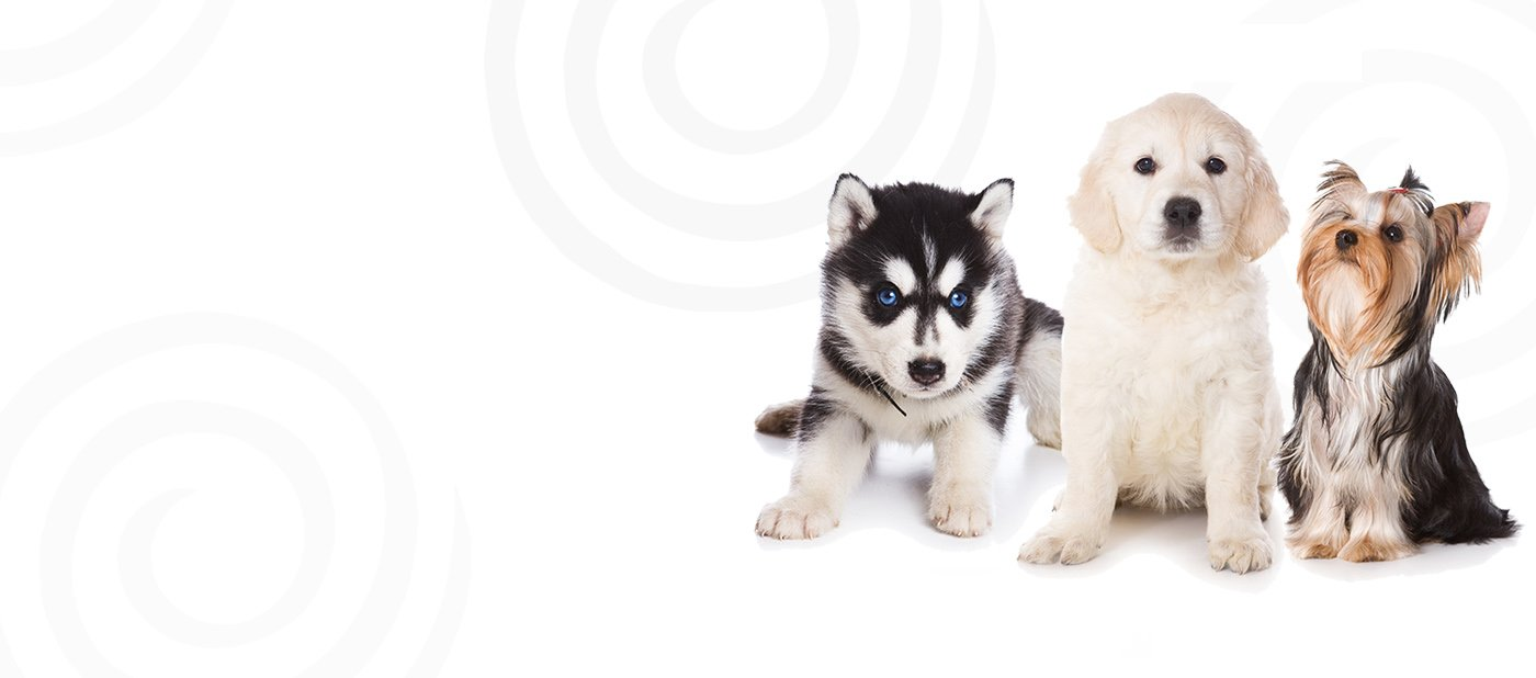 Petland athens-puppies for sale in Athens,Ohio