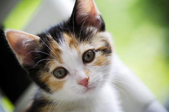 kittens for sale in Athens,Ohio