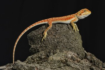 Reptiles for Sale - Petland Stores in Athens, Ohio & Parkersburg, WV